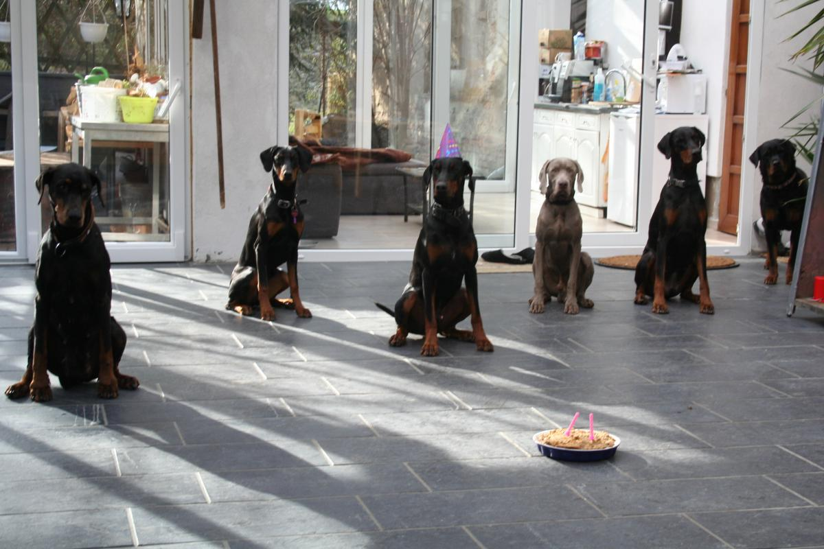 """Silex hat Geburtstag und alle feiern mit im Hundekindergarten """"Hundemensch"""""""